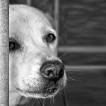 bezdomny_pies
